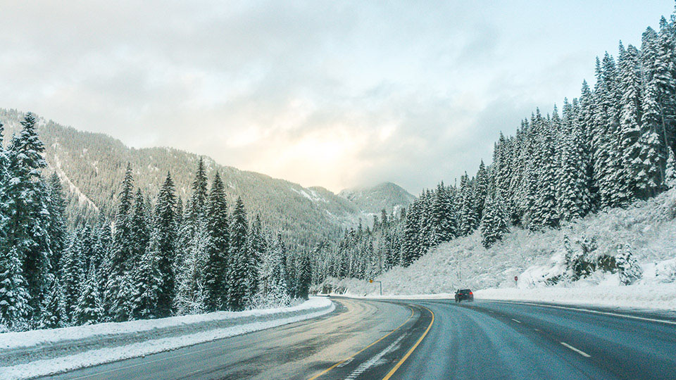 Snow covered trees lining a road - shutterstock_358262819