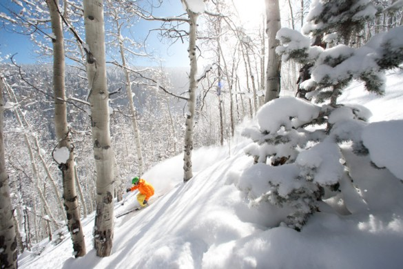 Beaver Creek tree skiing