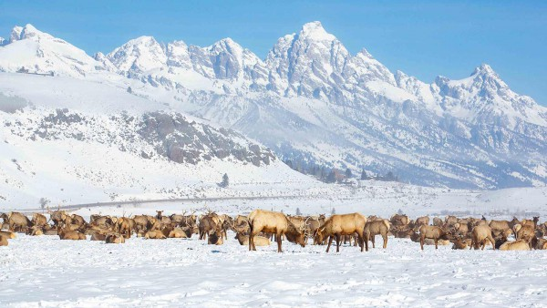 Jackson Hole Ski Resort, USA - Local wildlife