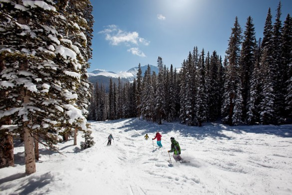 Three skiers riding between the trees in Winter Park