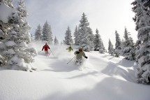 A group of friends ski deep powder through the trees in Vail